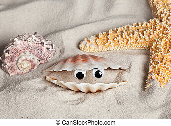 Funny beach seashell