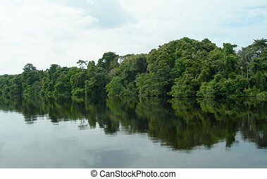 Amazon River rainforest - Rain forest mirrored in waters, on...