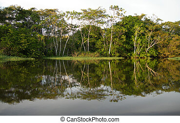 Amazon River rainforest
