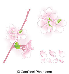 Apple blossom elements. Vector illustration.