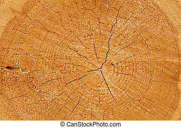 Cut tree trunk and annual rings of trees