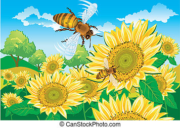 Bee and sunflower - Ideal relationship, bee and a sunflowers...