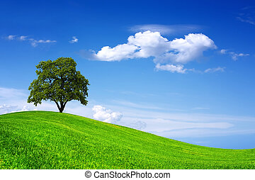 Beautiful oak tree on green field