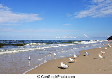 Beach with gulls