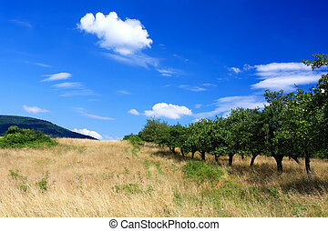 Mountain orchard on blue sky