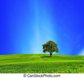 Oak on green meadow