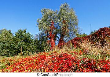 Vibrant autumnal colors