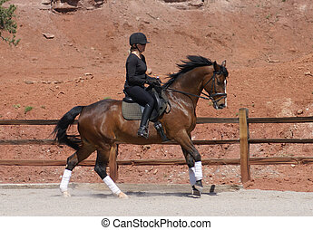 Canter - Dressage Thoroughbred on canter