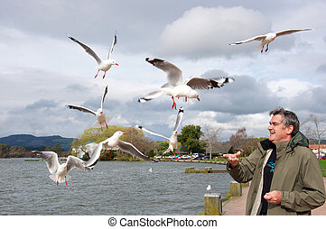 Man feeding Gulls - Man feeding bread to sea gulls in...