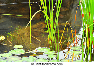 water grass 1476 - grass in the clear water with reflection
