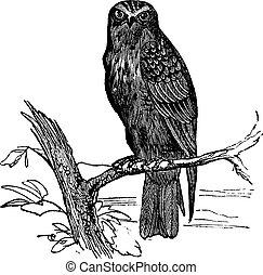 Eurasian Hobby or Falco subbuteo vintage engraving -...