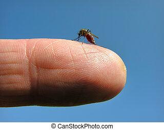 Mosquitos, ataque