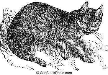 Wildcat vintage engraving