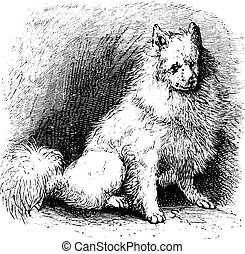 Husky vintage engraving - Husky or Canis lupus familiaris,...