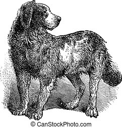 Newfoundland or Canis lupus familiaris vintage engraving -...