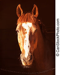 portrait of sorrel horse in dark outdoor sunny evening