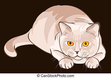 British shorthair lilac cat sits in ambush - British...