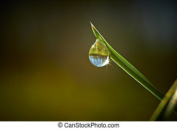 Green grass with dew drop on it