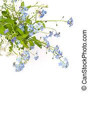 bello, blu, fiori