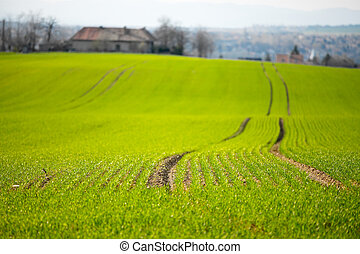 Field - Green agricultural field with shallow DoF