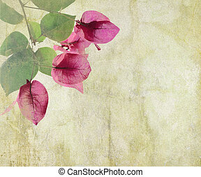 Bougainvillea artwork on cracked plaster background -...