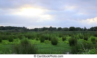 Marsh landscape - Green marsh landscape during spring on a...