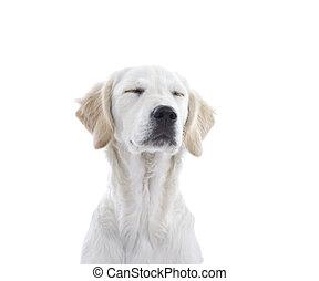 junger Hund, hund