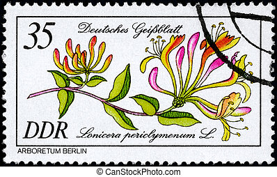 GDR - CIRCA 1981 Honeysuckle - GDR - CIRCA 1981: A Stamp...