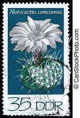 GDR - CIRCA 1974 Notocactus - GDR - CIRCA 1974: A Stamp...