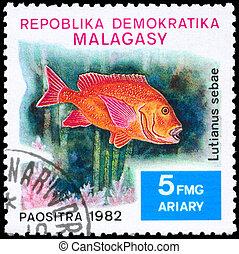 MALAGASY - CIRCA 1982 Snapper - MALAGASY - CIRCA 1982: A...