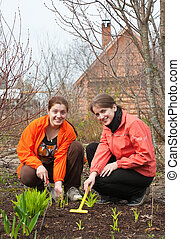 women  resetting sprouts in bed at garden