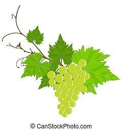 Grape vine - Grape vine isolated on the white background...