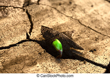 new life - Concept new life. Rising sprout on dry ground.