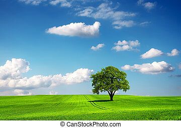 Oak tree and ecology landscape