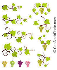 Grape vines design elements set. Vector illustration.
