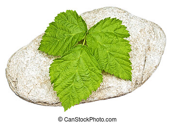 stone with leaf