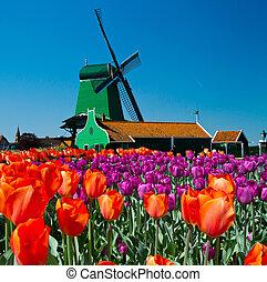 moinho de vento, Holanda