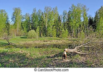 Tree cut down by a beaver - Forest landscape with a tree...