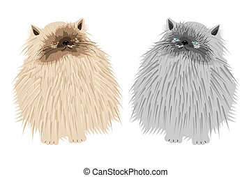 two persian cats on white backgroun