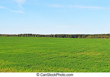 Green field in spring time - Green field on the forest...