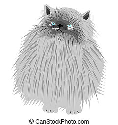 persian cat on white background - nice persian cat on white...