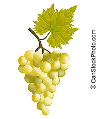 Sunny grape. Vector illustration. Have used mesh.