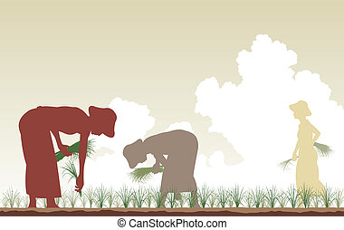 Rice planters - Editable vector silhouettes of women...