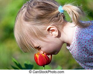 little girl smell flower - 2 years old girl smell tulip...