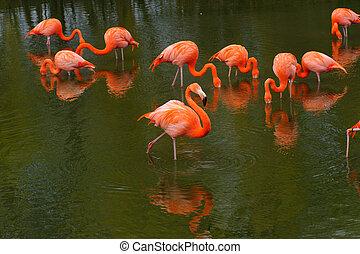 Flamingos feeding in a pool