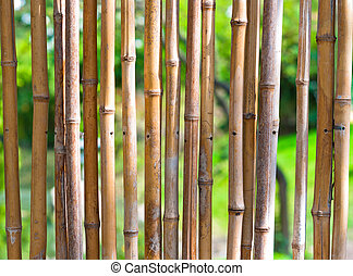 Bamboo with green blurry background