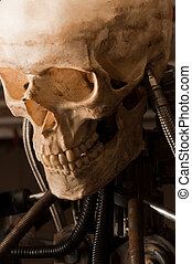 close up of a robot with human skull