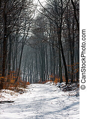A path in a forest at winter