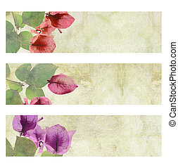 Flower Artwork Banner Set Isolated - Flower Artwork on...