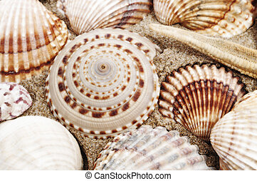 seashells - closeup of a pile of seashells on the sand